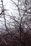 Katastrofa naturalna w formie lodu deszcz przychodził południowy region zdjęcia royalty free