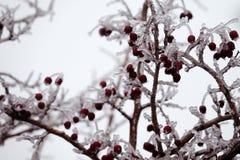 Katastrofa naturalna w formie lodu deszcz przychodził południowy region obrazy royalty free