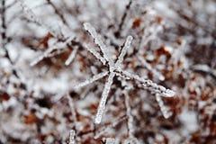 Katastrofa naturalna w formie lodu deszcz przychodzi? po?udniowy region fotografia royalty free