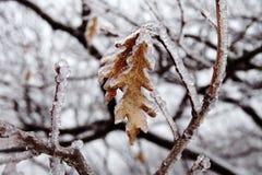 Katastrofa naturalna w formie lodu deszcz przychodzi? po?udniowy region obraz royalty free