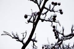 Katastrofa naturalna w formie lodu deszcz przychodzi? po?udniowy region zdjęcie royalty free