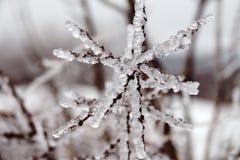 Katastrofa naturalna w formie lodu deszcz przychodzi? po?udniowy region fotografia stock