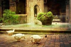 Katedra święty Eulalia w Barcelona, Hiszpania zdjęcie stock