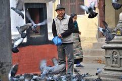 Feeding Pigeon at Kathesimbhu Stupa Stock Image