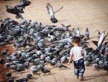 Kathmandu Nepal. Chasing pigeons in Nepal Stock Photography