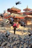 KATHMANDU, NEPAL - 14 DE JANEIRO DE 2015: Os pombos que reunem-se em grandes números em Durbar esquadram Imagem de Stock