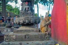KATHMANDU, NEPAL 15 DE OUTUBRO DE 2017: A família dos macacos que sentam-se no ar livre com oração embandeira perto do stupa do s Fotografia de Stock Royalty Free