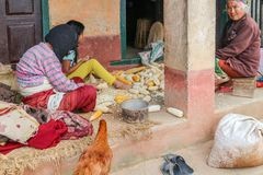 Kathmandu, Nepal - September 22, 2016: Unidentified Nepalese people removing corn seeds on the floor in the village, Nepal. Asia Royalty Free Stock Photo