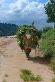 Kathmandu, Nepal - 22 settembre 2016: Donna nepalese in vestiti tradizionali che sostengono onere gravoso su lei indietro in un v Fotografia Stock