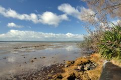 Katikati wybrzeża linia - MacMillan rezerwa obraz royalty free