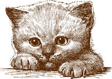 Katje vector illustratie