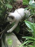 Katje in aard Stock Afbeeldingen