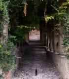 Katje in Alhambra royalty-vrije stock foto's