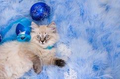 Katje bij de blauwe pluizige deklaag Stock Foto