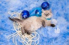 Katje bij de blauwe pluizige deklaag van het Nieuwjaar Royalty-vrije Stock Fotografie