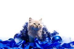 Katje bij de blauwe pluizige deklaag van het Nieuwjaar Royalty-vrije Stock Afbeelding