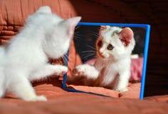 Katje bij de spiegel stock afbeelding