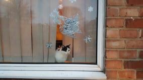 Katje bij het venster Royalty-vrije Stock Fotografie