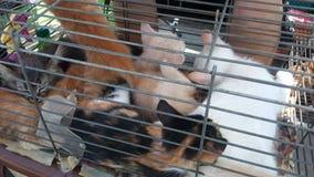 Katje bij kooi op markt stock videobeelden