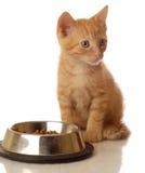 Katje bij voedselschotel Royalty-vrije Stock Afbeeldingen