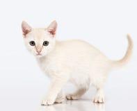 Katje dat me bekijkt. Royalty-vrije Stock Foto's
