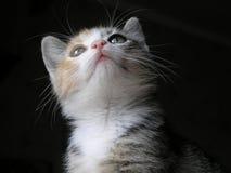 Katje dat omhoog eruit ziet Stock Foto