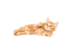 Katje dat omhoog eruit ziet Royalty-vrije Stock Foto