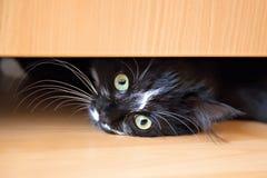Katje dat onder lade van garderobe ligt Stock Foto's