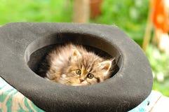 Katje dat in oude hoed rust Royalty-vrije Stock Fotografie