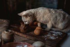 Katje in de keukenconsumptiemelk stock foto's