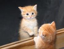 Katje in de spiegel, bezinning Royalty-vrije Stock Foto's