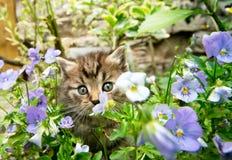 Katje in de tuin royalty-vrije stock afbeeldingen