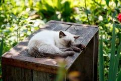 Katje in de tuin stock afbeeldingen