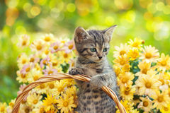 Katje in de tuin met bloemen royalty-vrije stock afbeelding
