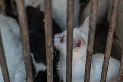 Katje die achter de tralies, kalm en veilig kijken royalty-vrije stock fotografie