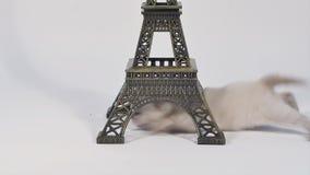 Katje die door de Reis geïsoleerde Eiffel lopen, stock video