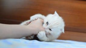Katje die een vrouwenhand bijten stock videobeelden