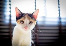 Katje die naar camera lopen Stock Afbeeldingen