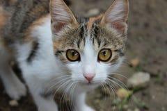 Katje die op affectie wachten Stock Foto