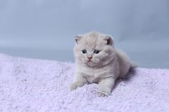 Katje die op een handdoek, leuk gezicht liggen stock fotografie