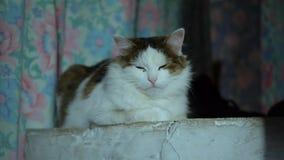 Katje die op het warme fornuis in het dorp rusten stock video
