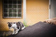 Katje die op oude laag rusten Royalty-vrije Stock Afbeelding