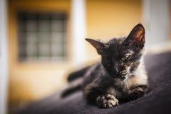 Katje die op oude laag rusten Royalty-vrije Stock Foto's