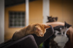 Katje die op oude laag rusten Stock Foto