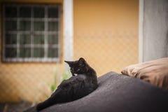 Katje die op oude laag rusten Stock Foto's