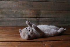 Katje die op zijn rug, poten omhoog liggen, houten achtergrond royalty-vrije stock afbeelding