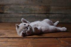 Katje die op zijn rug, poten omhoog liggen, houten achtergrond stock afbeelding