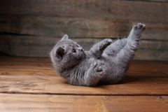 Katje die op zijn rug, poten omhoog liggen, houten achtergrond royalty-vrije stock afbeeldingen
