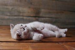 Katje die op zijn rug, poten omhoog liggen, houten achtergrond stock afbeeldingen