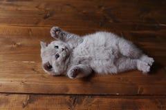 Katje die op zijn rug, poten omhoog liggen, houten achtergrond stock foto's